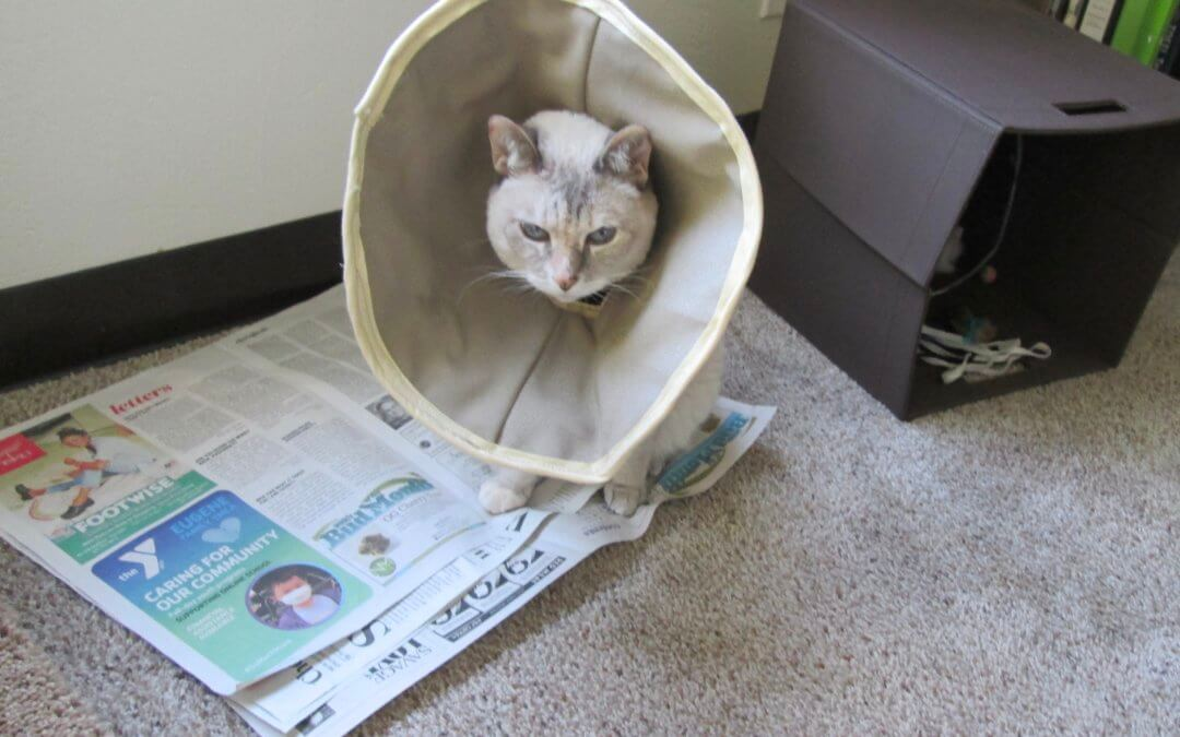 Sofi's Blog:   My Newspapers and I